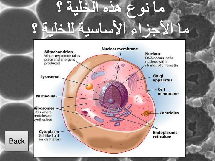 ما نوع هذه الخلية ؟