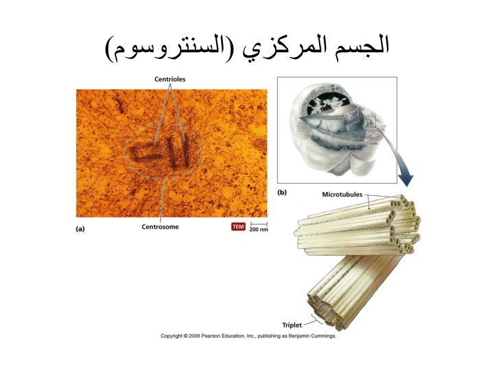 الجسم المركزي (