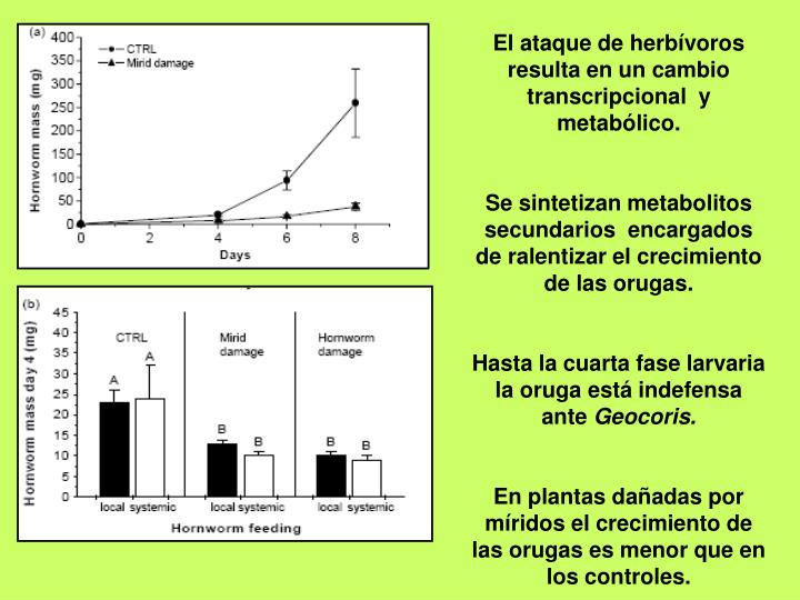 El ataque de herbívoros resulta en un cambio transcripcional  y metabólico.