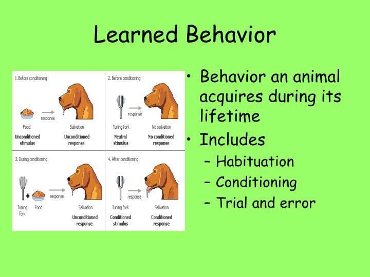 Learned Behavior