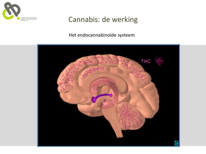 Cannabis: de werking