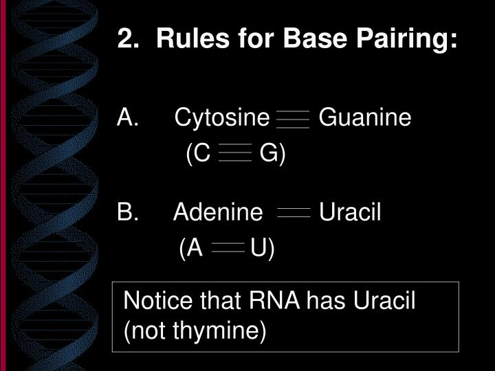 2 rules for base pairing