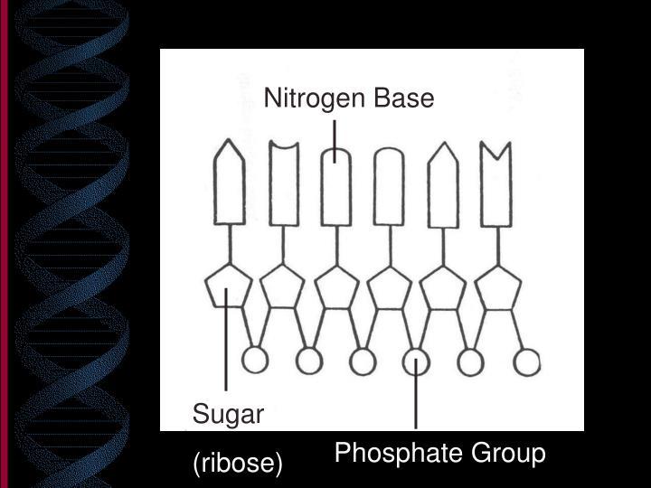 Nitrogen Base