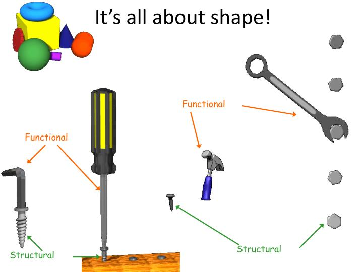 It s all about shape