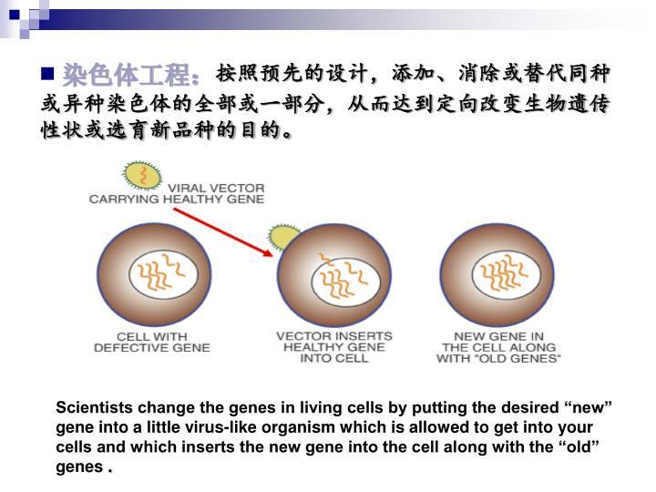 染色体工程: