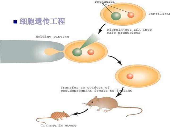 细胞遗传工程