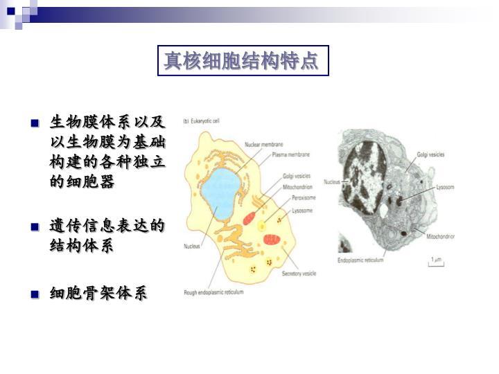 生物膜体系以及以生物膜为基础构建的各种独立的细胞器