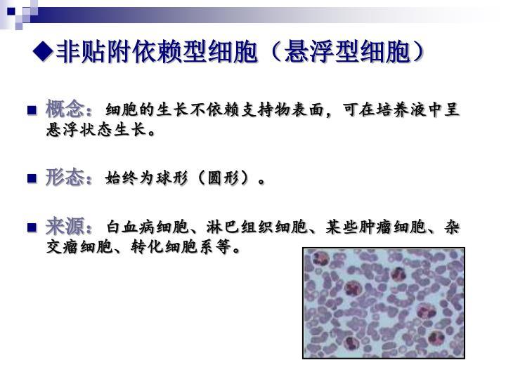 非贴附依赖型细胞(悬浮型细胞)