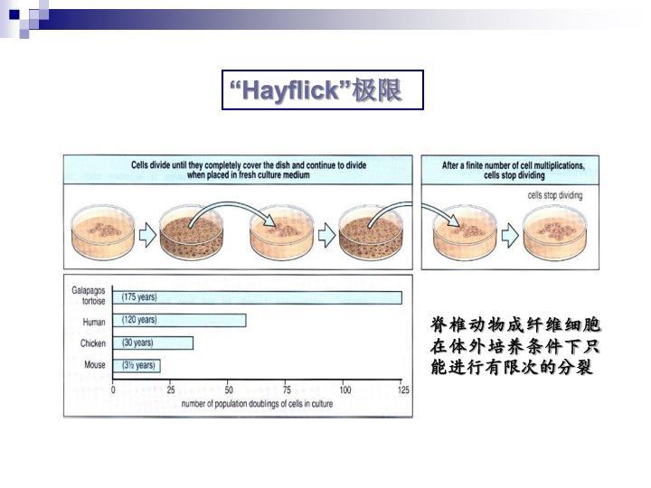 """Hayflick"""