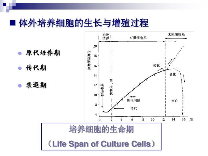 体外培养细胞的生长与增殖过程