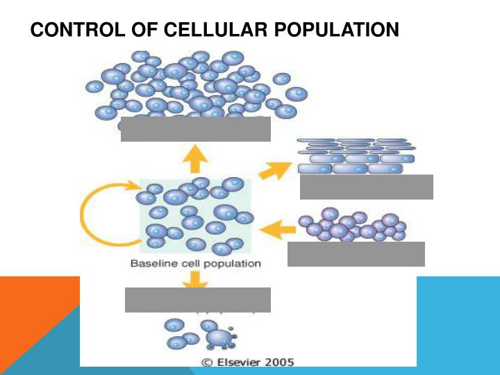 Control of cellular population