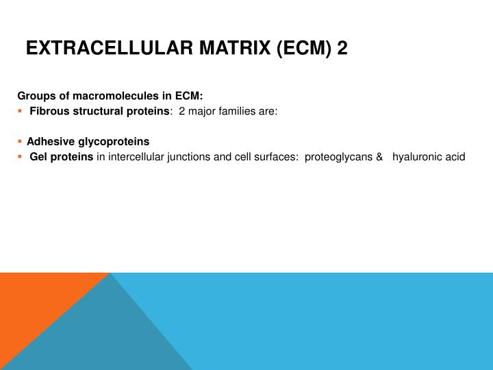 Extracellular matrix (ECM) 2