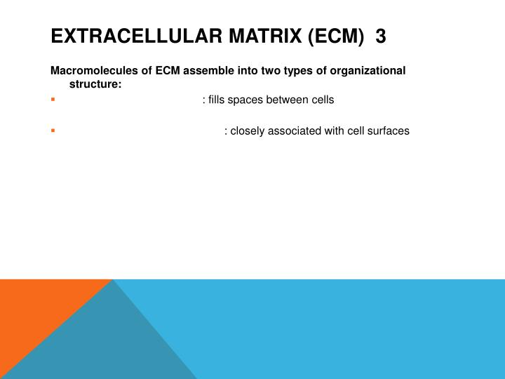 Extracellular matrix (ECM)  3