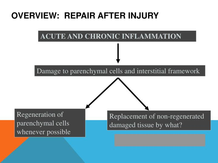 Overview:  Repair after injury