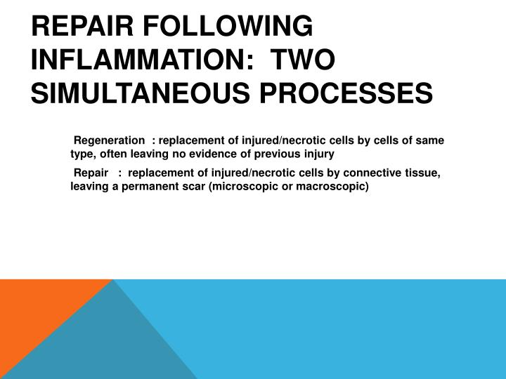 Repair following inflammation two simultaneous processes