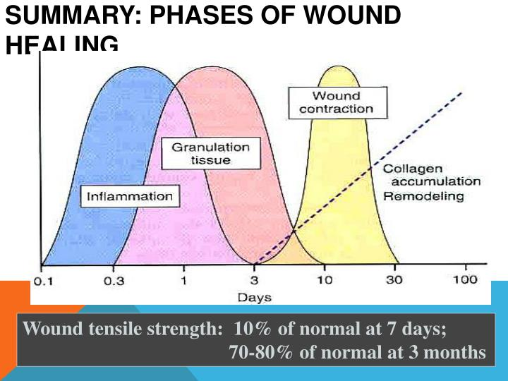 Summary: phases of wound healing