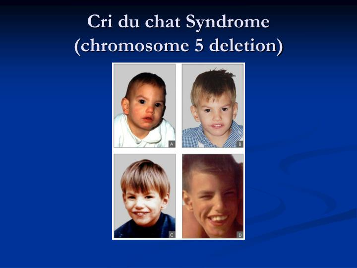 an introduction to the analysis of the cri du chat syndrome The past decade has seen tremendous advances in our knowledge of cri-du-chat syndrome at the genetic level, we can now pinpoint the critical region that is responsible for cri-du-chat to a small part within the short arm of chromosome 5 ( 5p 152-5p 153) at the developmental level, there is strong evidence that toddlers.
