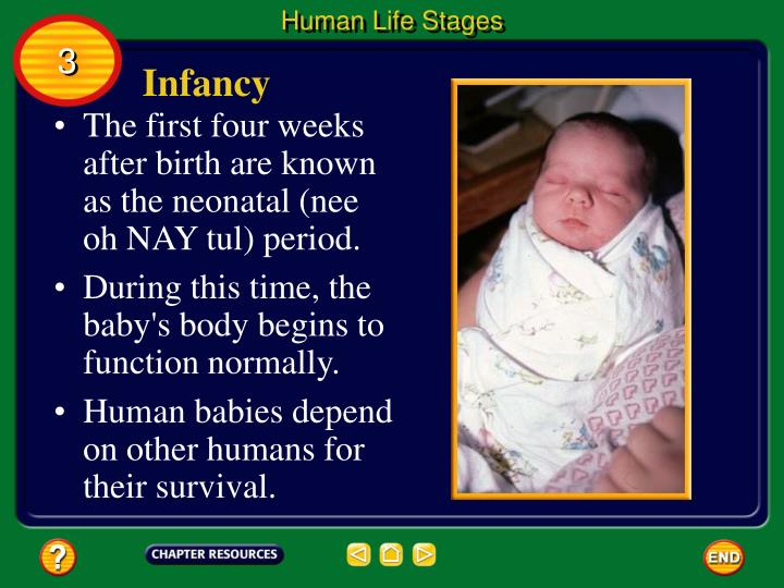 Human Life Stages