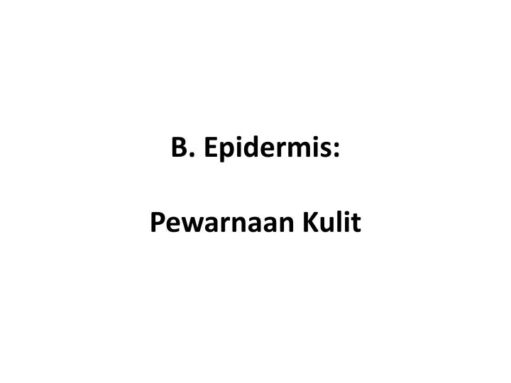 B. Epidermis:
