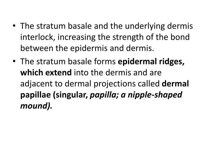 The stratum