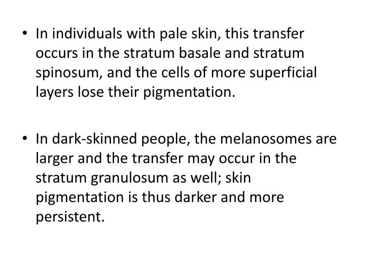 In individuals with pale skin, this transfer occurs in the stratum