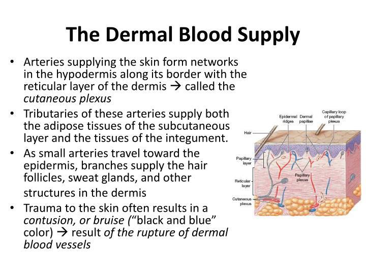 The Dermal Blood Supply