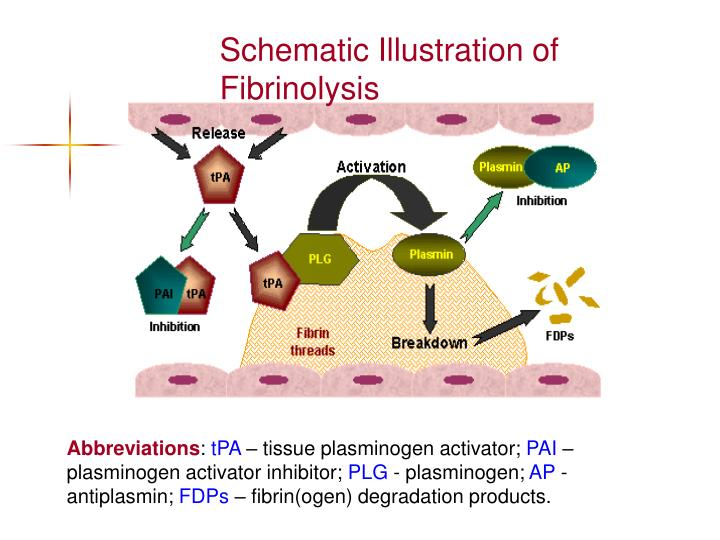 Schematic Illustration of  Fibrinolysis