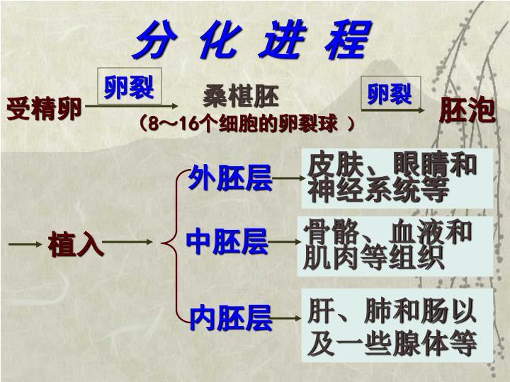 分 化 进 程