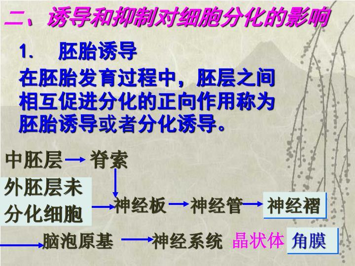 1.  胚胎诱导