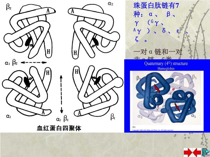 珠蛋白肽链有7种: