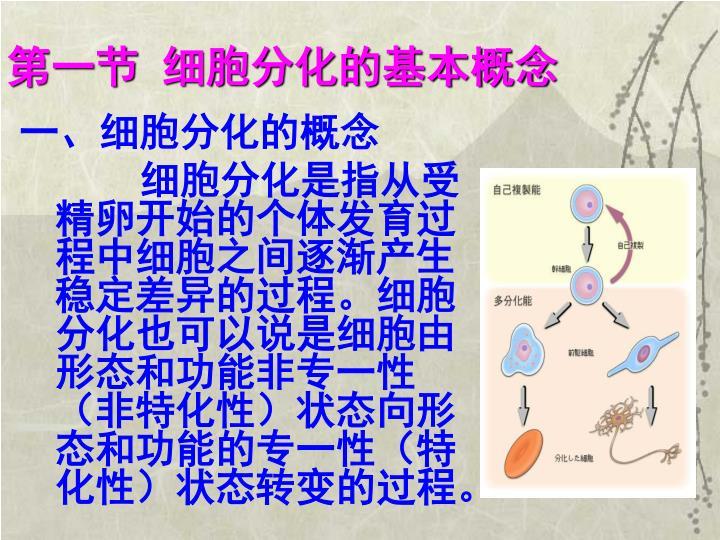 第一节 细胞分化的基本概念