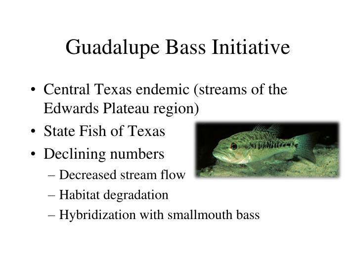 Guadalupe Bass Initiative