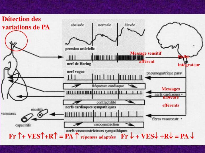 Détection des variations de PA