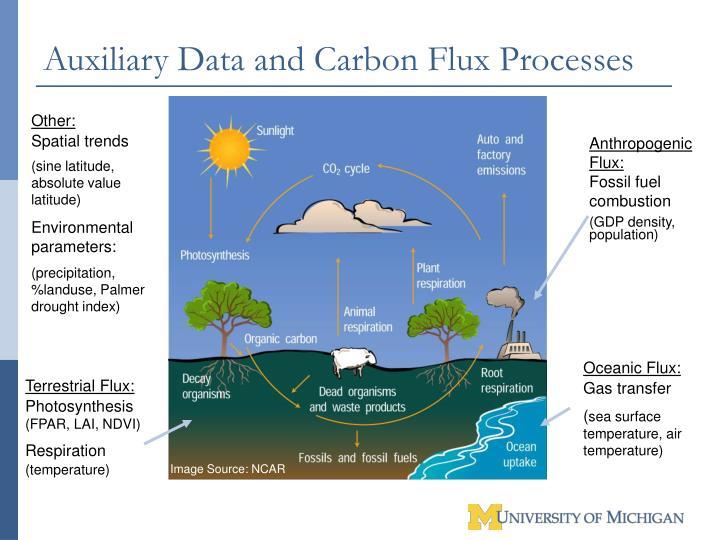 Auxiliary Data and Carbon Flux Processes