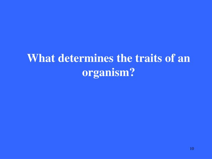 What determines the traits of an organism?