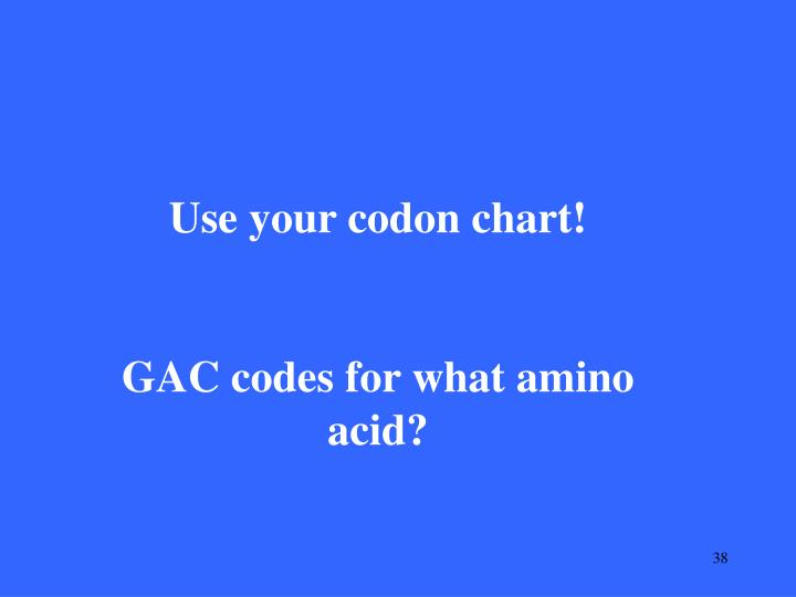 Use your codon chart!