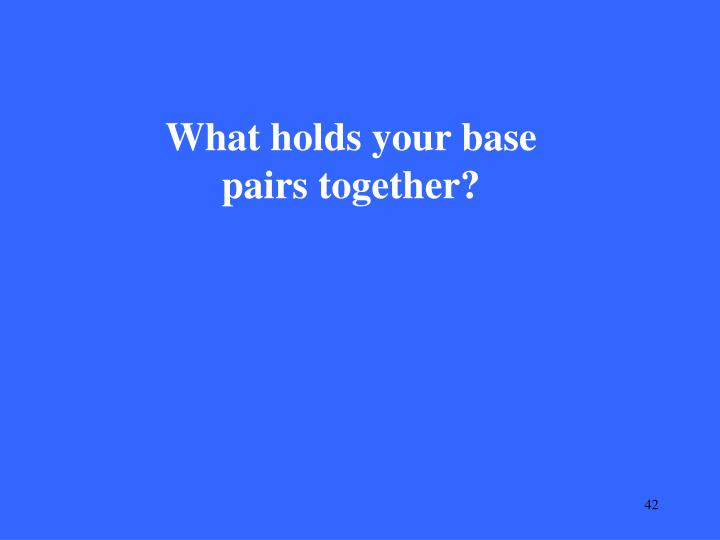 What holds your base pairs together?