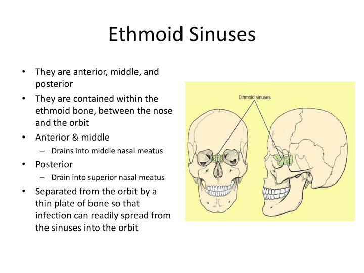 Ethmoid Sinuses