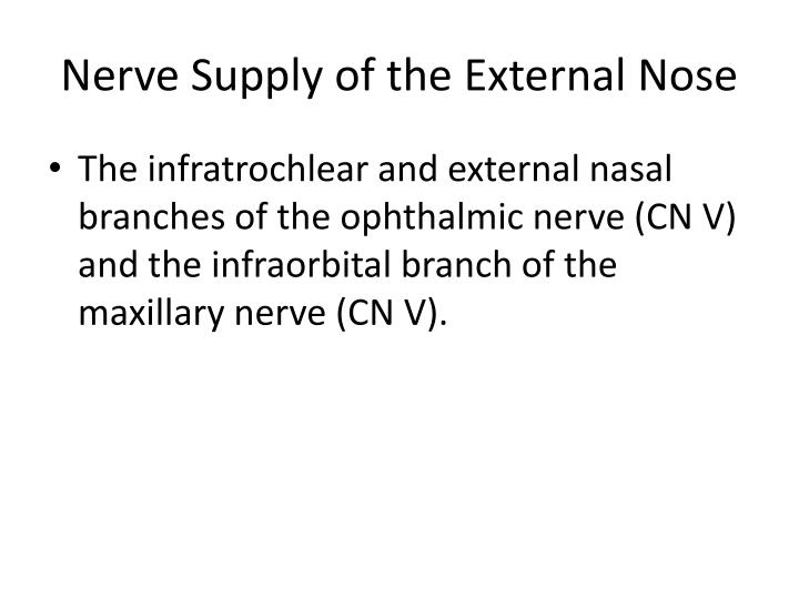 Nerve Supply of the External Nose