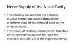 nerve supply of the nasal cavity