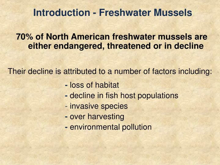 Introduction freshwater mussels