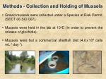 methods collection and holding of mussels