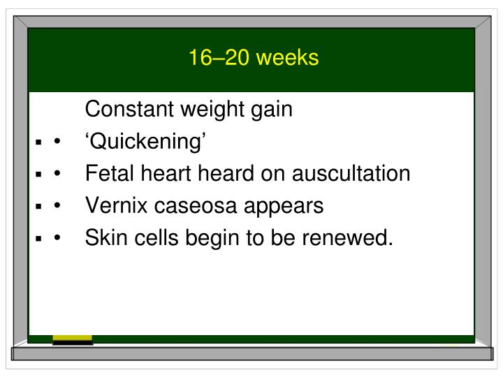 16–20 weeks