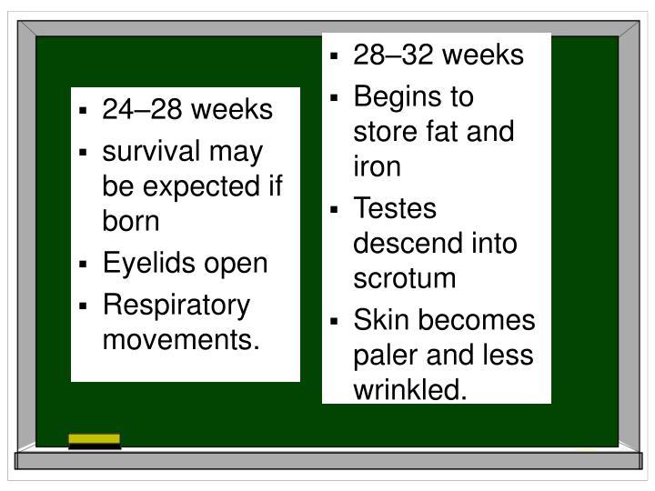 28–32 weeks