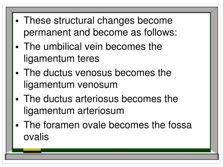 These structural changes become permanent and become as follows: