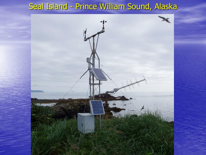 Seal island prince william sound alaska