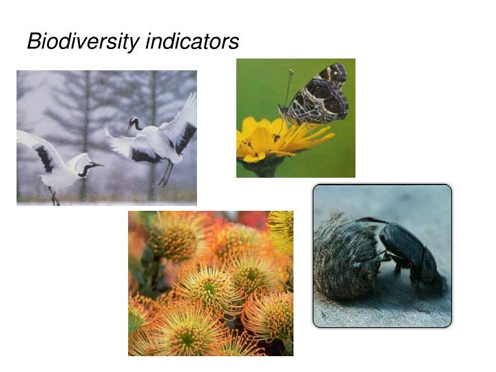 Biodiversity indicators