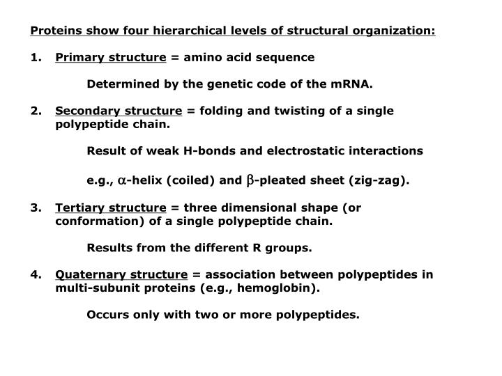 Proteins show four hierarchical levels of structural organization:
