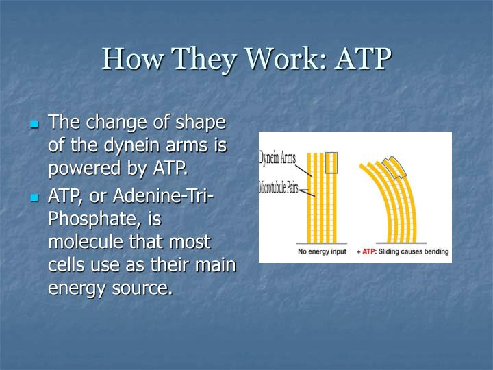 How They Work: ATP