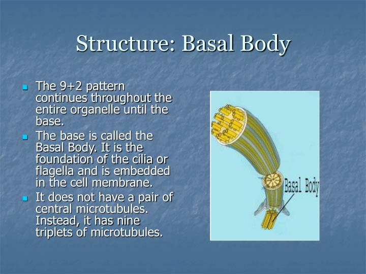 Structure: Basal Body
